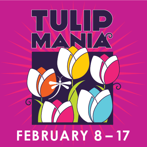 tulips infront of magenta background. Words saying Tulipmania February 8-17
